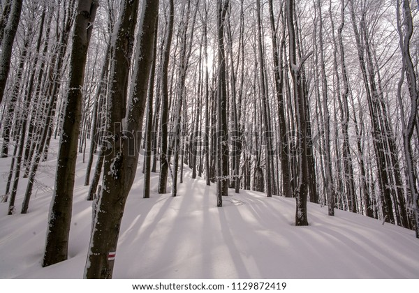 Ustrzyki Gorne, Poland - February 24, 2018: Mountain trail to Tarnica in winter. Bieszczady National Park in winter. Winter in the Bieszczady. Snow-covered trees and mountains.