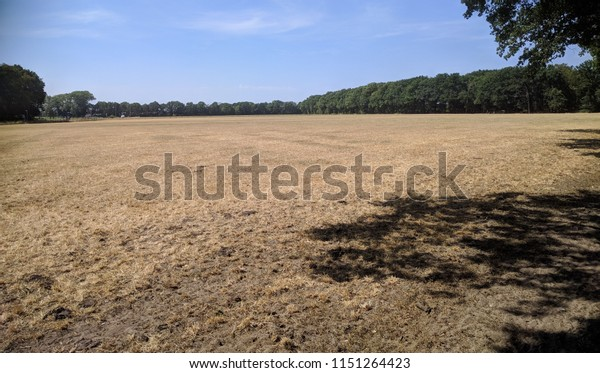 the usual green pastures in The Netherlands turn to brown due to the drought in the summer of 2018