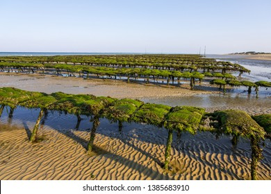 Utah Beach, France - August 31, 2018: Oyster beds on the oyster farm at low tide. Utah Beach, Normandy, France