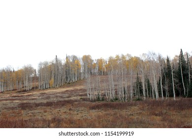 Utah hillside with sparse trees on a gray autumn day