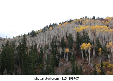 Utah mountainside with lots of trees on a gray autumn day