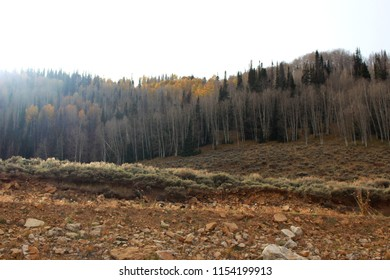 Utah mountainside with lots of trees and rocky terrain on a gray autumn day