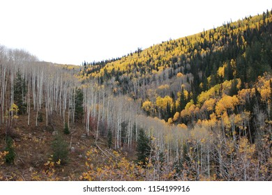 Utah mountainside with trees on a gray autumn day