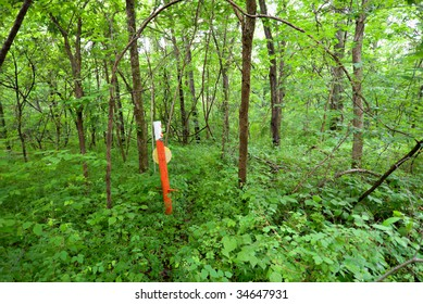 Utility marker in a woodland.