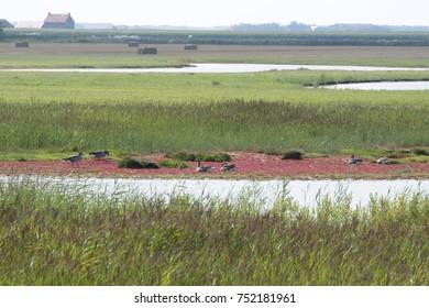 Utopia nature reserve Texel, The Netherlands