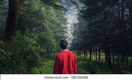 uttarakhand,india-2 june 2020:man in forest.this is a picture of a man observing the nature.the man is looking at the tall trees.solo traveller in forest.wallpaper.