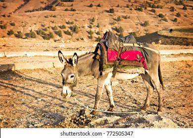 Uzbek donkey loaded with bags and camping stuff. Donkey face close up, Uzbekistan