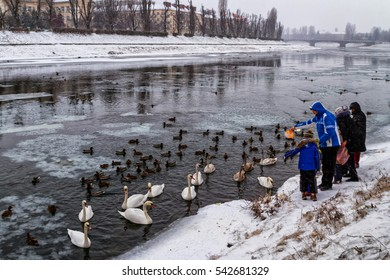 Uzhgorod, Ukraine - December 25, 2016: Local people feed the swans and wild ducks that spend the winter on the river.