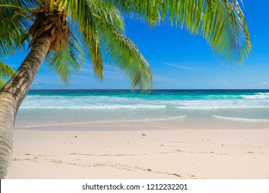 Vacation beach on Hawaii islands. Tropical sandy beach with palm and turquoise sea.  Summer vacation and tropical beach concept.