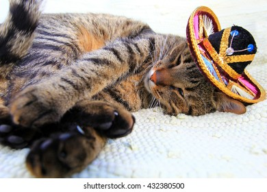Vacation in Mexico - cat sleeping on sun chair wearing mexican hat - a sombrero