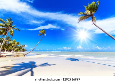 Vacation on beautiful and lonely sandy beach in a paradise on Samana, Dominican Republic  in the Caribbean with palms, sky, ocean and clouds and beautiful clear water in the ocean