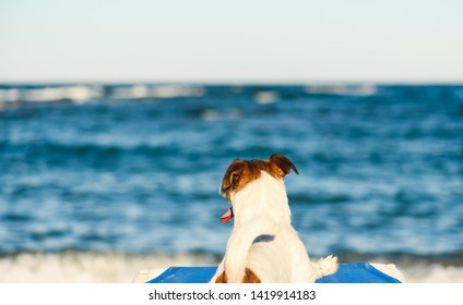 Vacation, pet, beach concept - dog at pet friendly beach sunbathing on deckchair and looking at sea waves