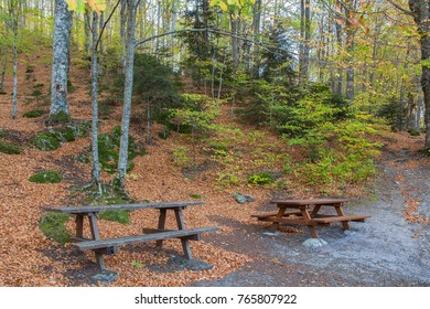 The vacation place in the amazing autumn beech forest in the Tuscany mountains, Italy