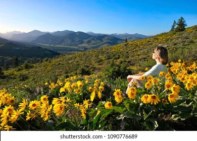Vacation travel in Washington State. Woman sitting among Arnica or Balsamroot sunflowers on hill with beautiful views. Patterson Mountain. North Cascades National Park. Winthrop. United States.