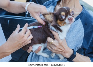 Vaccination against rabies,Rabies vaccines Dog got a vaccination against the rabies,