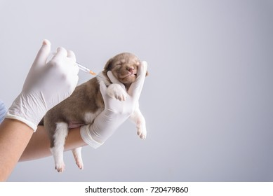 Vaccination for puppies