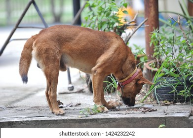 Vaccine Rabies Bottle and Syringe Needle Hypodermic Injection,Immunization rabies and Dog Animal Diseases,Medical Concept with Dog blurred Background.Selective Focus Vaccine vial
