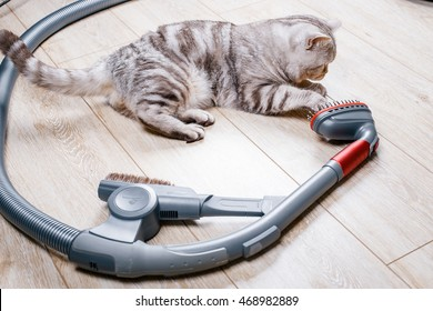 vacuum cleaner with a nozzle for cleaning spetsilno animals