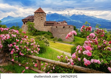 Vaduz castle, Liechtenstein, in the Alps mountains, with beautiful blooming pink rose flowers