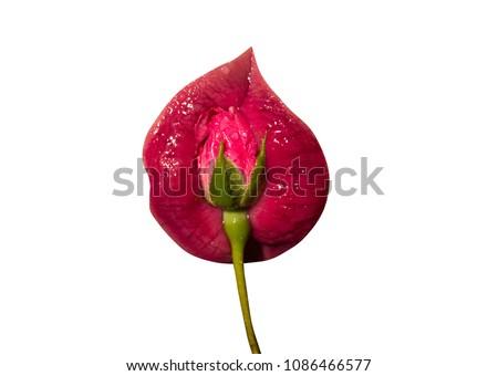 Vagina Lähikuva kuvat