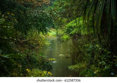 Vakona Forest Madagascar