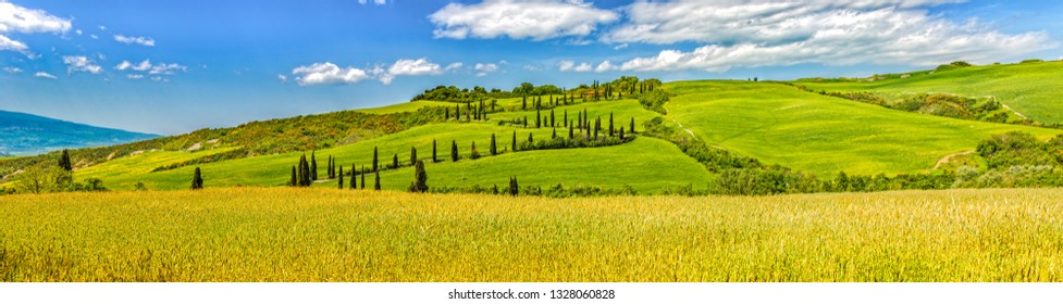 Val d'Orcia, Tuscany/Italy - May 10 2016: Panoramic landscape in the hills of Val d'Orcia with cypresses and wheat fields. La Foce - cypress tree lined road in Val d'Orcia