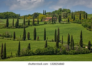 Val d'Orcia, Tuscany/Italy - May 10 2016: La Foce - cypress tree lined road in Val d'Orcia. Scenic landscape in the hills of Val d'Orcia with cypresses and wheat fields.