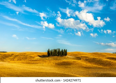 Val D'Orcia,Tuscany,Italy 09 August 2010 :Cypresses in val D'Orcia,Unesco World Heritage site
