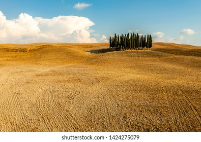 Val D'Orcia,Tuscany,Italy 11 August 2010 The famous cypress trees of the Val D'Orcia,Unesco World Heritage site