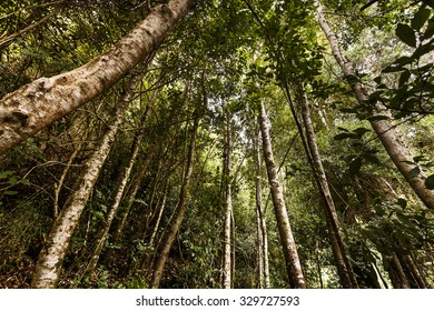 The Valdivian temperate rain forests are a temperate broadleaf and mixed-forest ecoregion located on the west coast of southern South America, lying mostly in Chile and extending into Argentina.