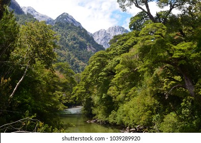 Valdivian temperate rainforests of southern Chile (Chilean Patagonia)