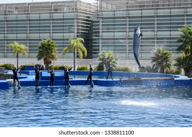 VALENCIA, SPAIN - 08 2018 - Dolphins show in Valencia oceanografic