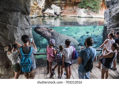 Valencia, Spain - August 19, 2017. People watch and take photos of a hippo inside the Bioparc of Valencia city in Spain.