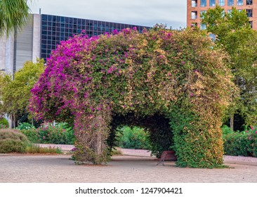 VALENCIA, SPAIN - AUGUST 30, 2018: A shady arbor on a city street in shape of an animal, formed by climbing plants flowering at one side.