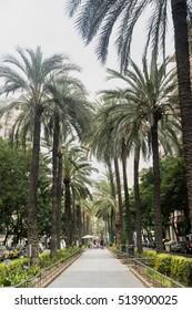 VALENCIA, SPAIN - JULY 14, 2016: Valencia (Spain), gardens in the Avenida del Regne de Valencia at evening