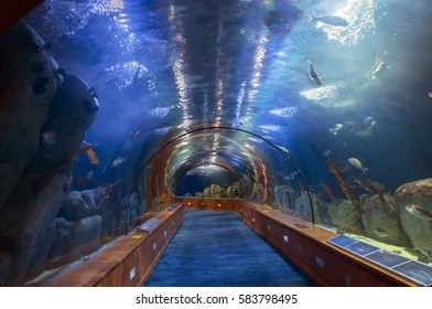 Valencia, Spain, September, 22, . Underwater tunnel in oceanographical Park in September 22, 2016, Valencia, Spain.L Oceanographic is an aquarium and a functioning research station