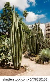 Valencia, Spain-07/19/2019: Jardin Botanico de la Universidad de Valencia, The Botanical Garden of the University of Valencia was founded in 1567 for the study of medicinal plants.