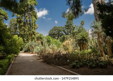 Valencia, Spain-07/19/2019: Jardin Botanico de la Universidad de Valencia, The Botanical Garden of the University of Valencia was founded in 1567 for the study of medicinal plants. Only For Editorial