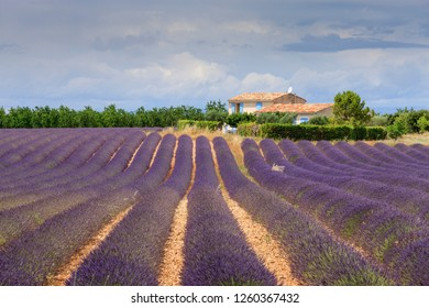 Valensole Forcalquier Alpes-de-Haute-Provence Provence-Alpes-Cote d'Azur France 28th June 2017 Lavendar field