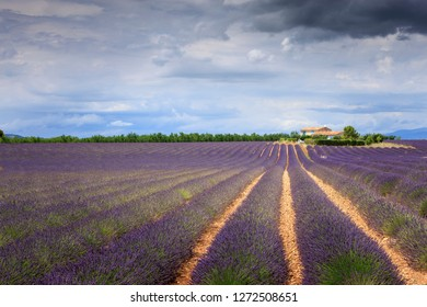 Valensole Forcalquier Alpes-de-Haute-Provence Provence-Alpes-Cote d'Azur France 28th June 2017 View over lavender fields