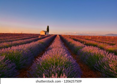 Valensole, France - July 20, 2017: stretches of colorful lavender at sunset in the south of France in summer