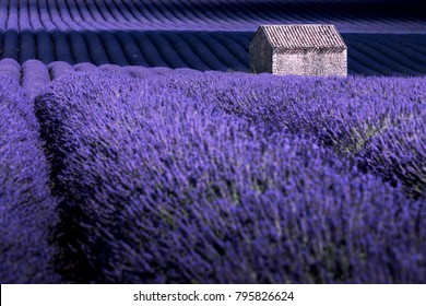 Valensole, Provence, France. lonely house in thepurple lavender field.