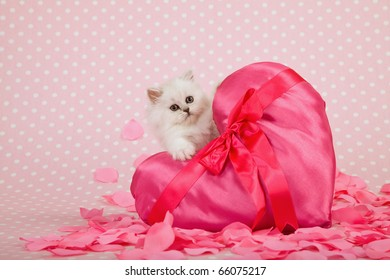 Valentine kitten with pink heart and rose petals