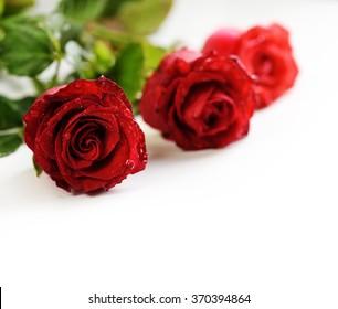 Valentine roses over white background