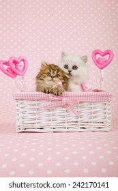 Valentine silver and golden Chinchilla Persian kittens sitting inside white basket with ornamental pink Valentine hearts on light pink background