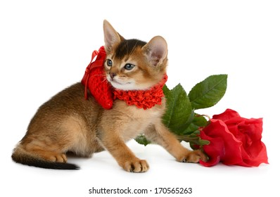 Valentine theme kitten with red heart and rose isolated on white background