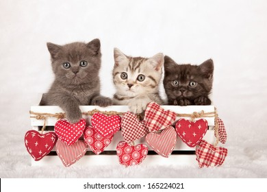 Valentine theme kittens sittings inside white wooden box with red patchwork hearts on white fake fur background
