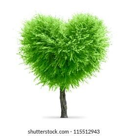 Valentine tree, love concept, heart shape tree over white background