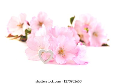 Valentines Day background with pink cherry  blossoms. Valentines card with heart.