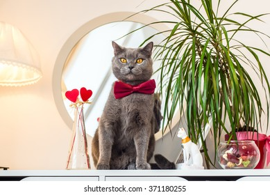 Valentines Day cat in a red bow tie sitting near a mirror